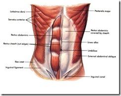 abdominals-736541